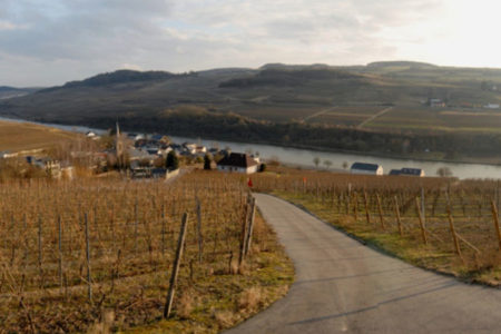 Die Weinberge Mosel Luxemburg