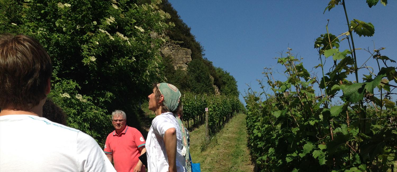 Weinwanderung mit Bob