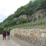 WINE – TASTE – ENJOY, Wochenende der offenen Weinkeller