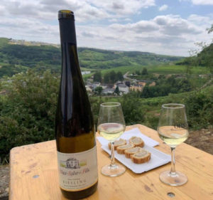 Weinwanderung Traumschleife Palmberg